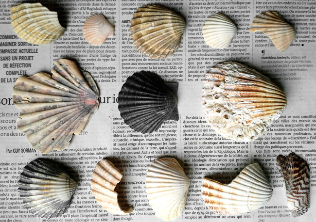 Fragments-anatomiques-coquillage-diary-det